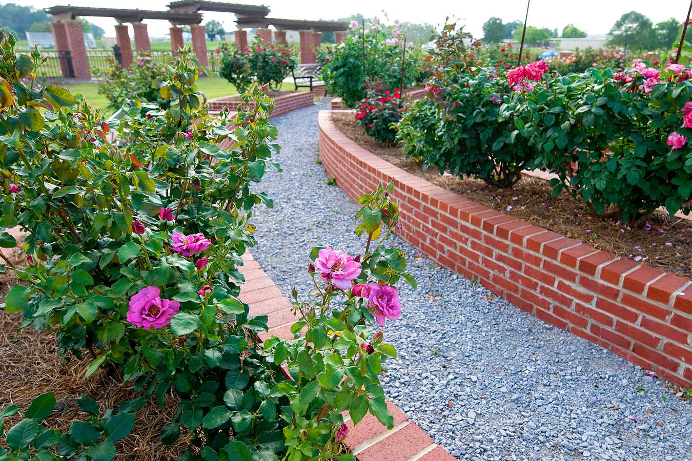 Veterans Memorial Rose Garden Image 3
